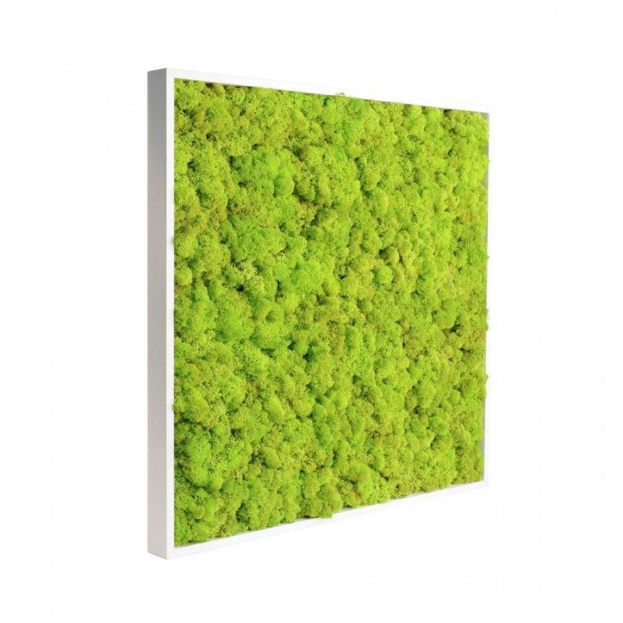 cadre v g tal stabilis tableau stabilis cadre floral stabilis 0 d 39 eau 0 de soleil 0 d. Black Bedroom Furniture Sets. Home Design Ideas