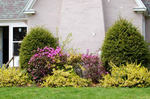 Tips For Effective Foundation Plantings Foundation Planting