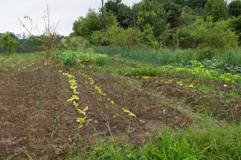 ¿Cuáles son las mejores hortalizas para principiantes en huerting?