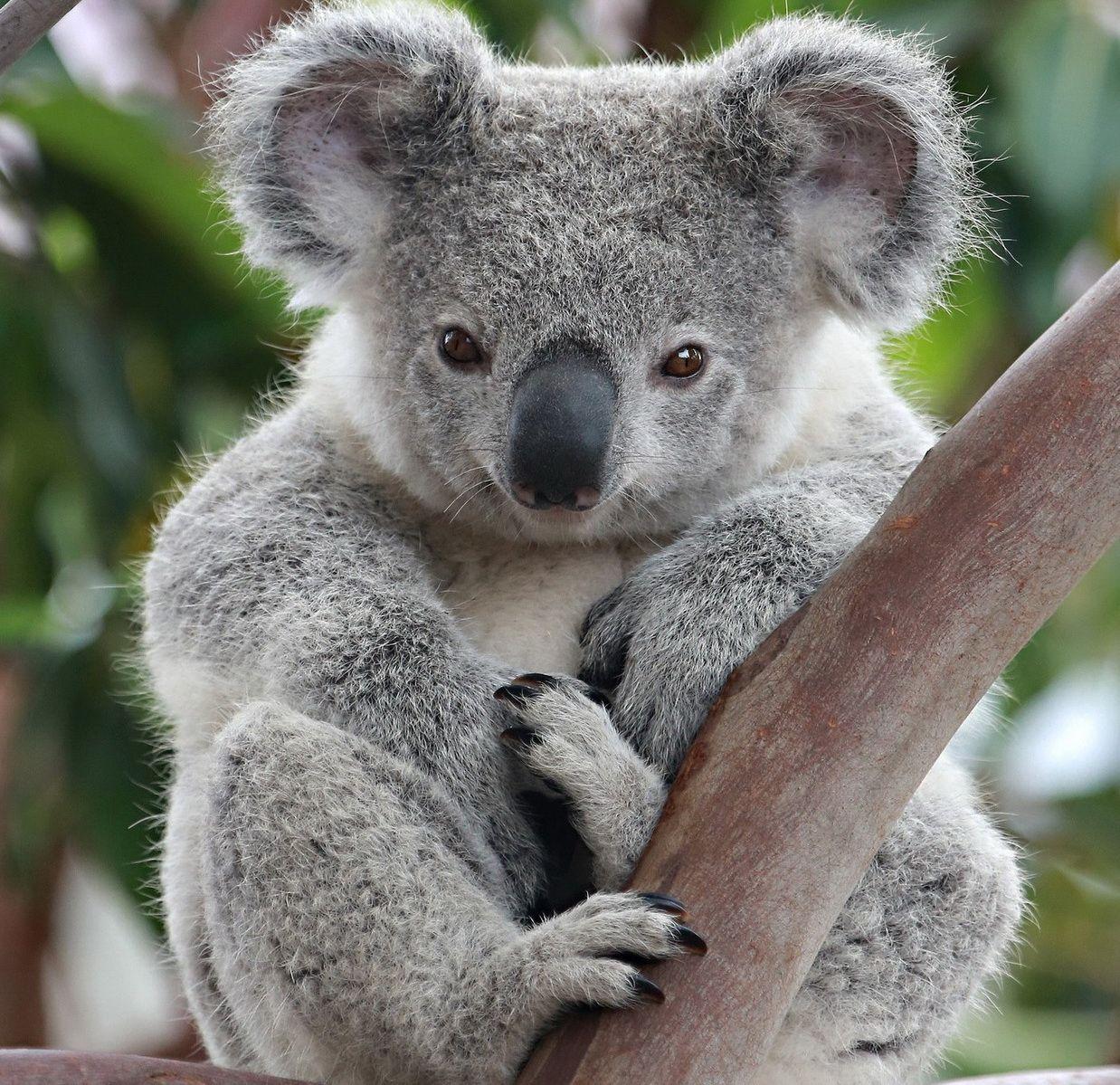 she is CUTE I will name her lil wil Koala, Koala bear