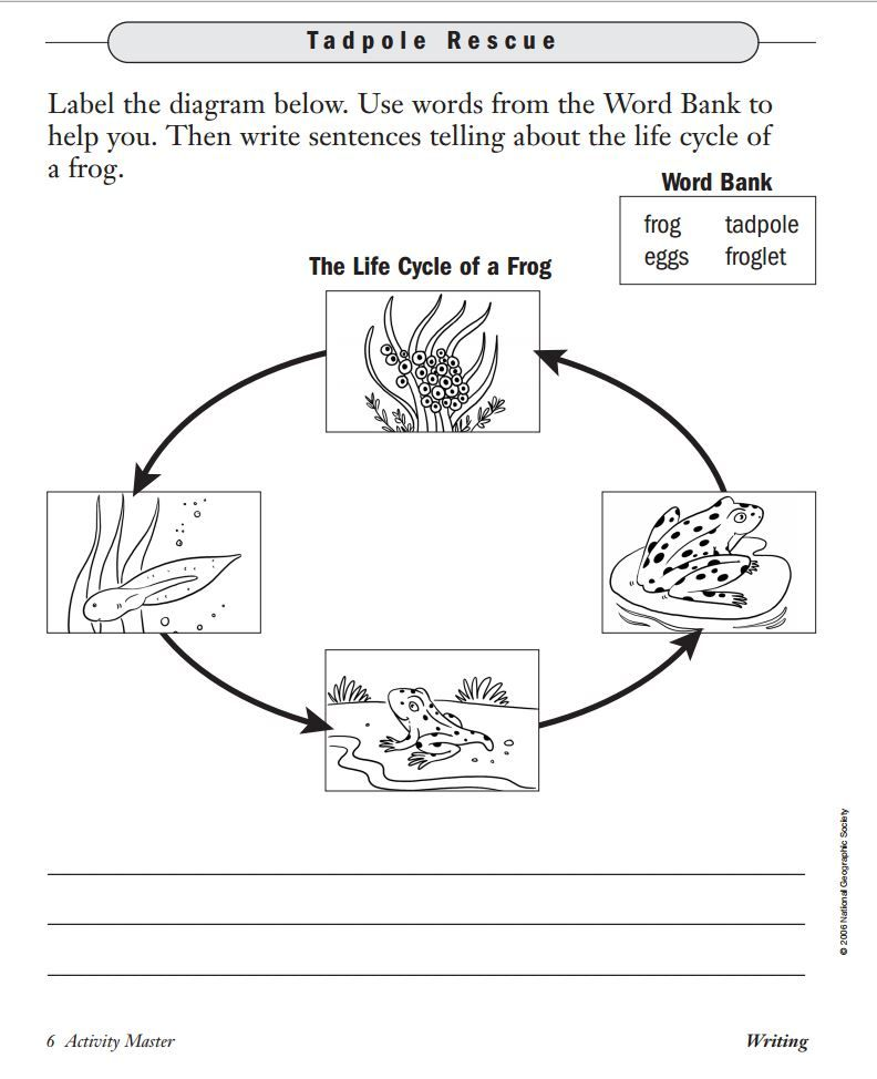printable life cycle of a frog worksheet frogs pinterest worksheets social studies and. Black Bedroom Furniture Sets. Home Design Ideas