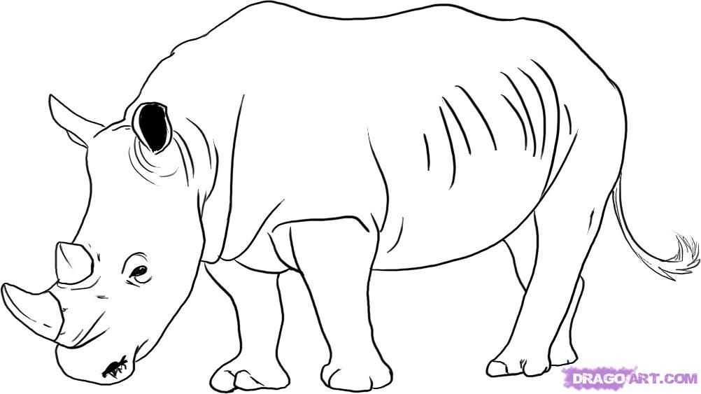 rhino line drawings - Google Search Eddie Pinterest Rhinos - fresh realistic rhino coloring pages