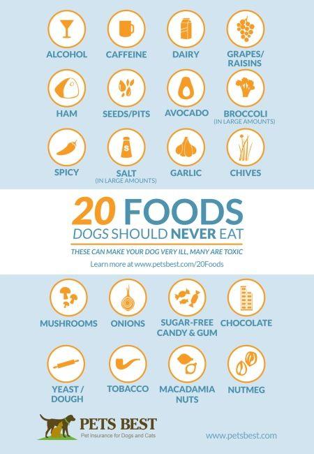 20 Foods Dogs Should Never Eat Food Dogs Shouldnt Eat Eat Food