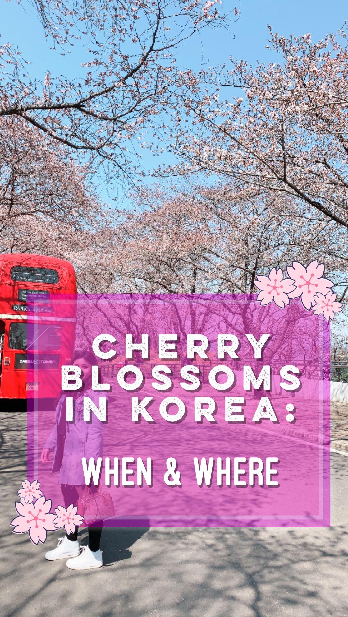 Cherry Blossoms 2019 When Where In Korea Cherry Blossom Cherry Blossom Festival Blossom