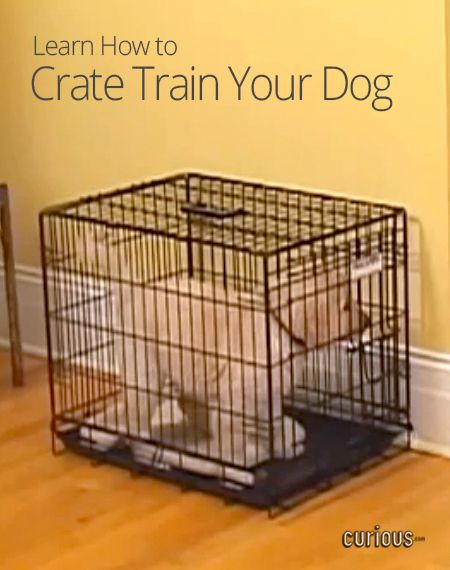 Watch Train Crate Train Your Dog Or How Can You House Train