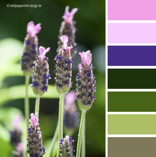 Farbpalette Wand: Farbinspiration, #Farbpalette, #Lavendel, Rosa, Violett