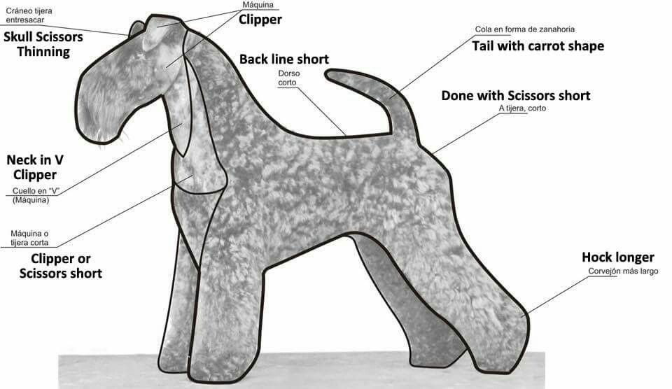 How To Trim A Kerry Blue Kerry Blue Terriers Dog Salon Dog