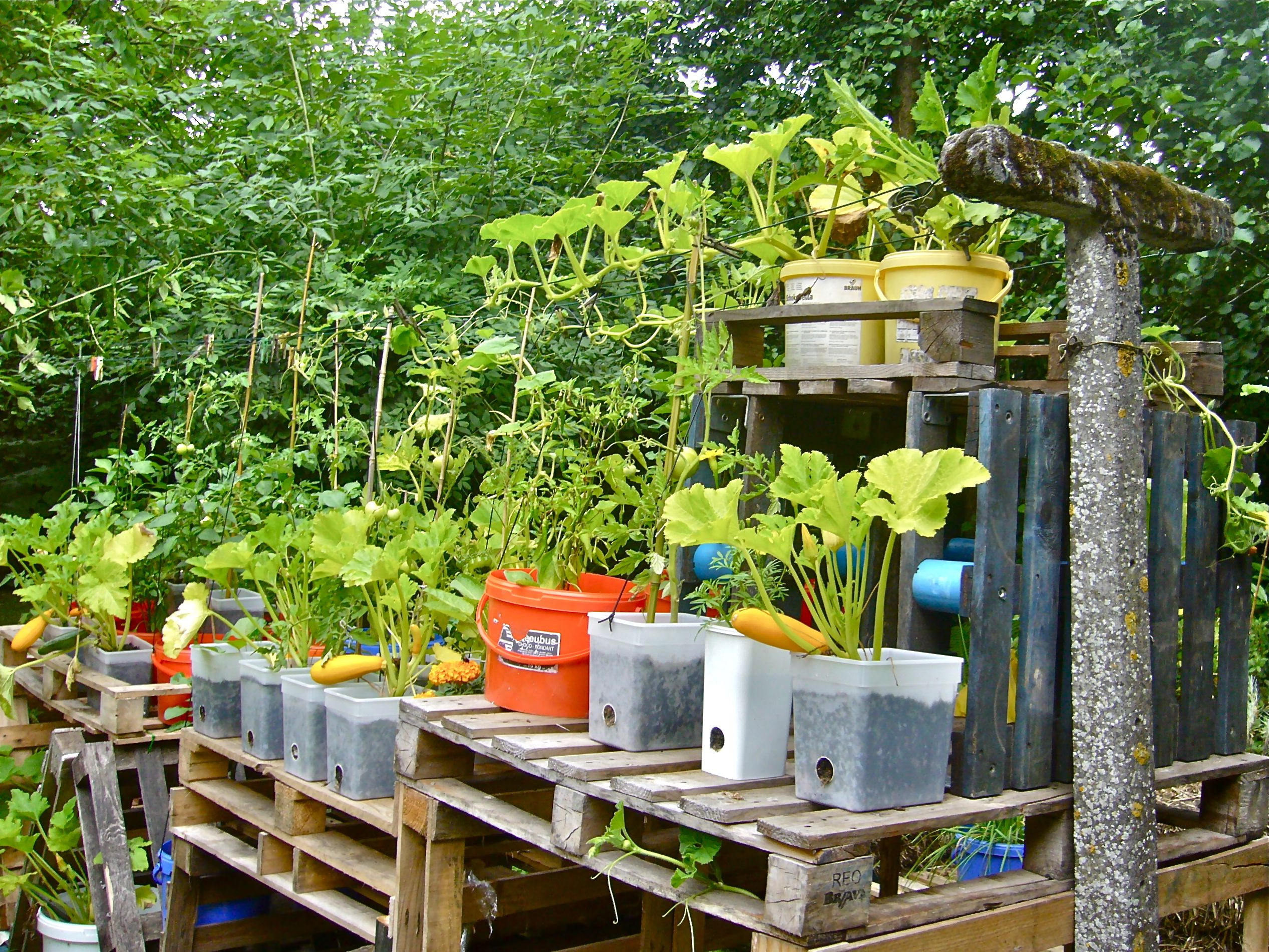 Hunger Is Widespread Despite A Plentiful Supply Of Farmland In Pakistan Irin News Home Vegetable Garden Design Small Vegetable Gardens Garden Ideas For Renters