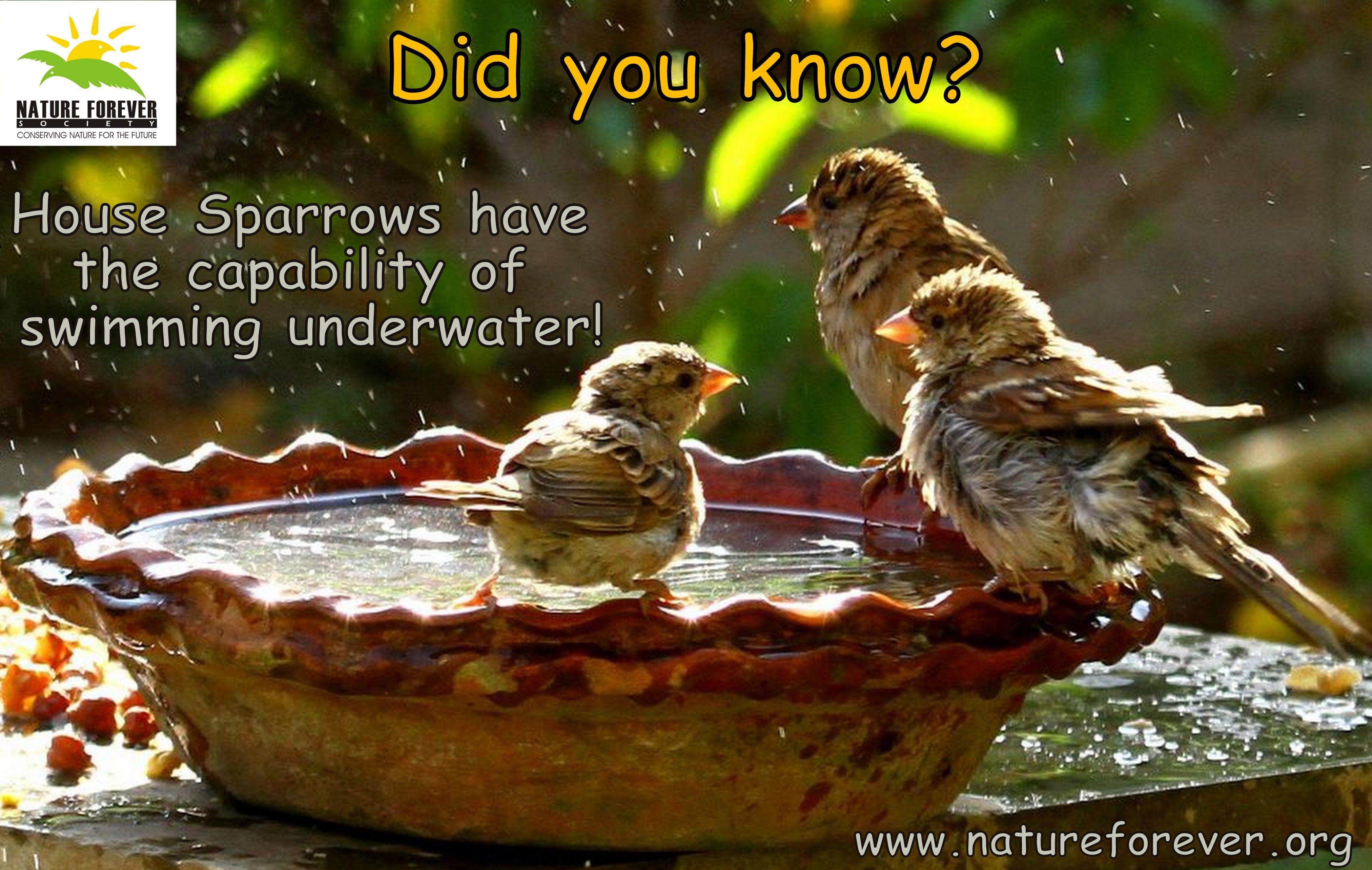 Sparrows Water Facts Conservation