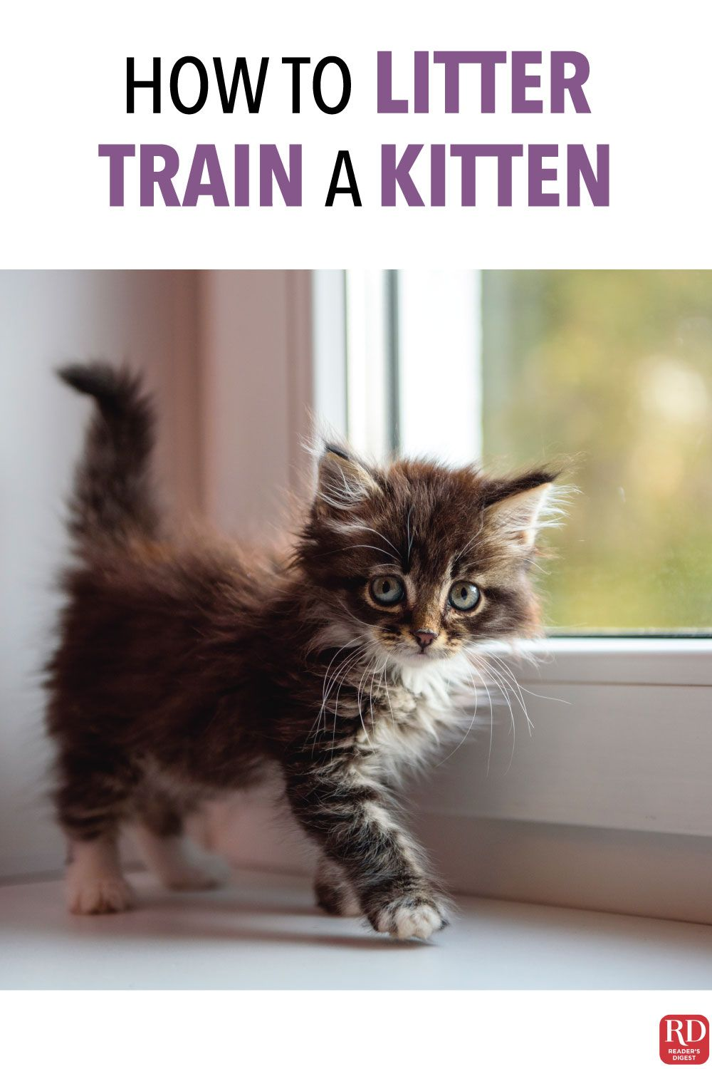 How To Litter Train A Kitten Without Mother In 2020 Litter Training Kittens Litter Training Best Cat Litter