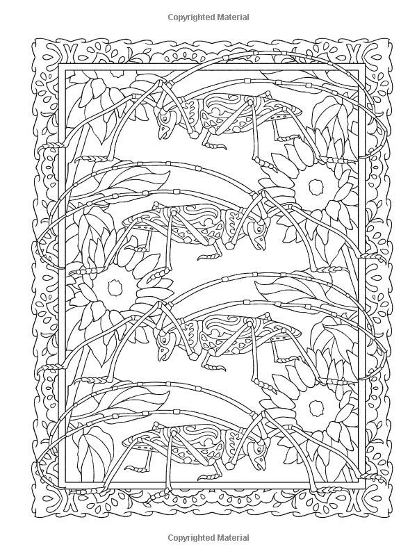 Creative Haven Incredible Insect Designs Coloring Book Books Marty Noble
