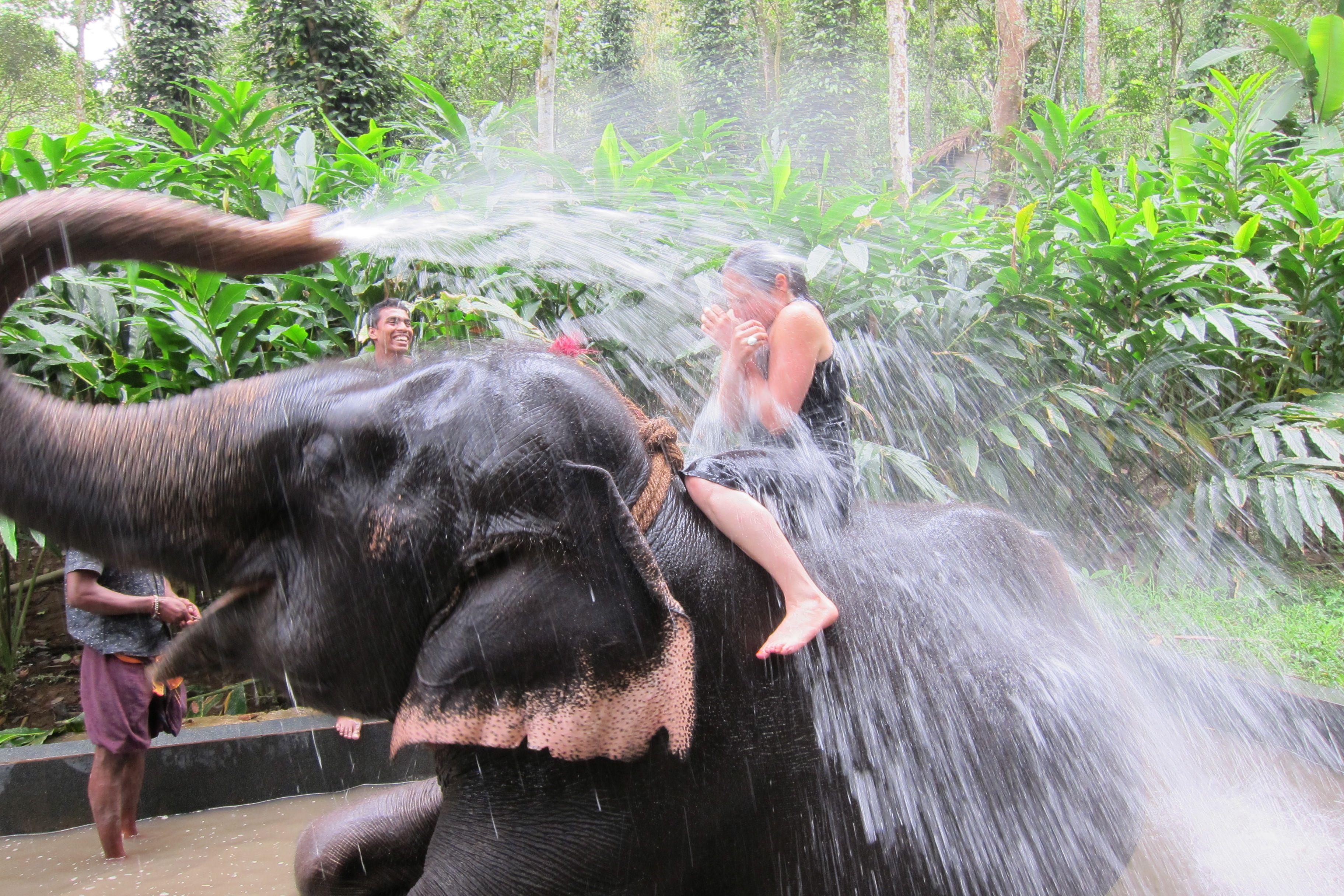 Afar Com Highlight Unexpected Elephant Shower Kerala Palakkad