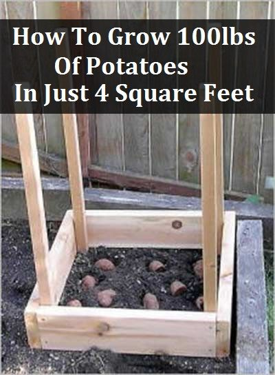 How To Grow 100 Lbs Of Potatoes In 4 Square Feet Growing Potatoes Plants Growing Vegetables