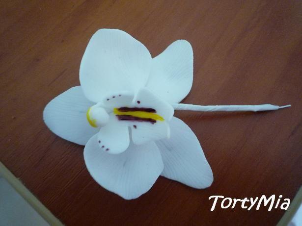 Orchidea Moth na dôtiku | Torty od mamy