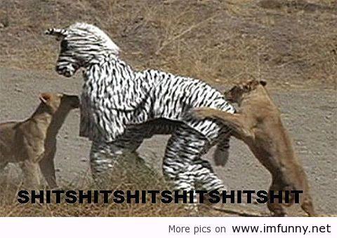 Why-you-should-never-dress-as-a-zebra.jpg 480×340 pixels
