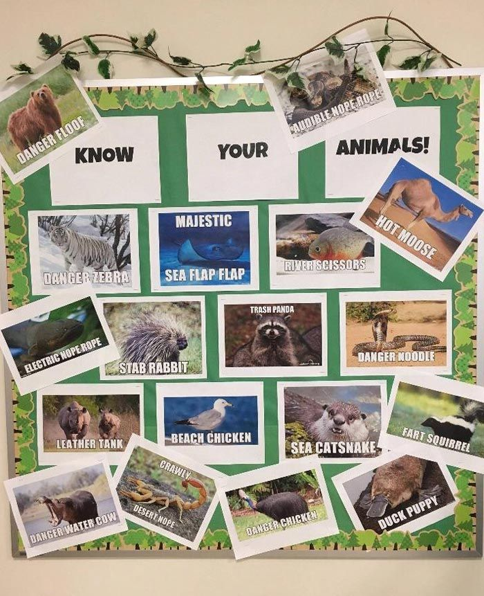 Know Your Animals Animals, Funny, Funny pictures
