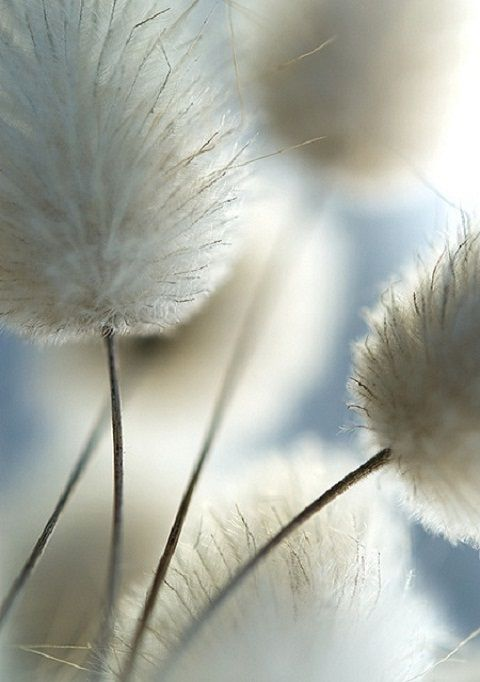 Photo of Wild flowers, soft and airy flower photography