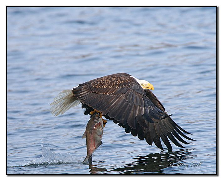 Catch Of The Day, For Both Of Us! by Gerry Sibell on 500px