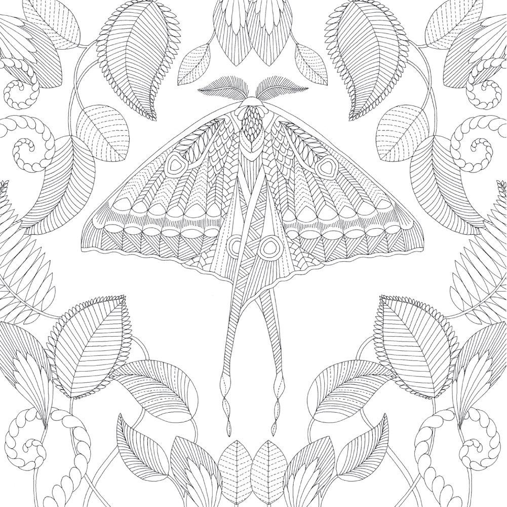 Millie Marotta Tropical Wonderland Moth Coloring Millie Marotta Tropical Wonderland Butterfly Coloring Page Millie Marotta Tropical [ 1000 x 1001 Pixel ]