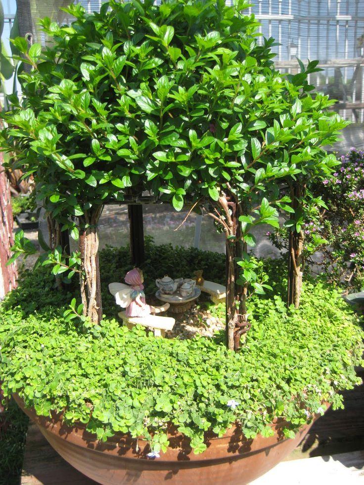 Jardin en la maceta jardines miniaturas pinterest - Jardines en macetas ...