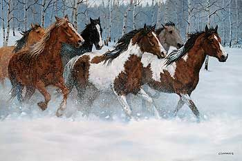 Winter Run Horses Ovation Canvas By C Cummings Wild Wings Also