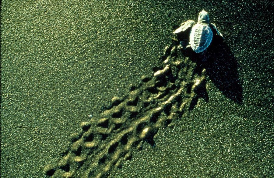 Lonely Turtle on sand