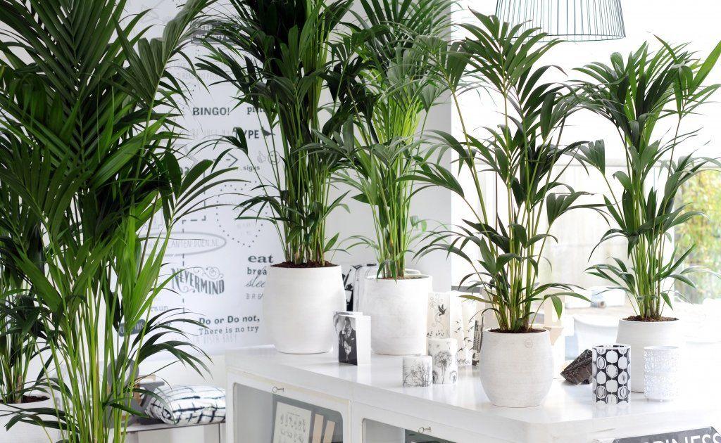 Die Top 5 luftreinigenden Pflanzen Zimmerpflanzen