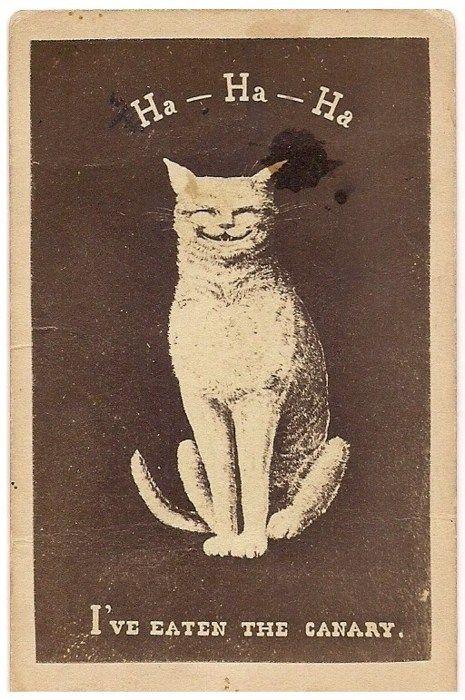 Bitch cat