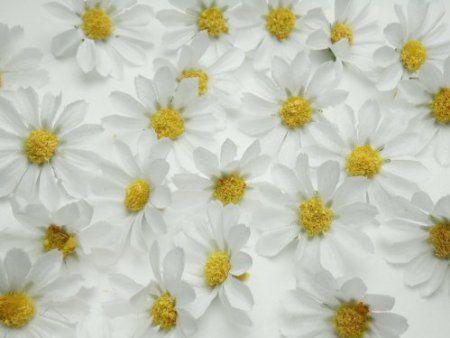 Margeriten Blüten weiss 25 Stück Kunstblüten Streudeko Tischdeko: Amazon.de: Küche & Haushalt
