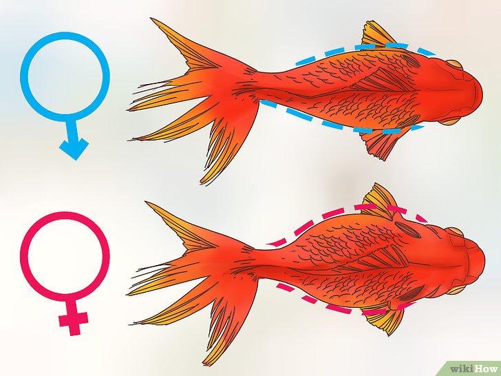 poisson rouge bouton blanc Recherche Google Poisson
