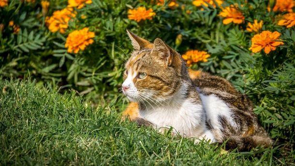 Fancy Hinterlassenschaften im Blumenbeet sind nicht nur l stig bei Kontakt mit Katzenkot kann der Erreger Toxoplasmose
