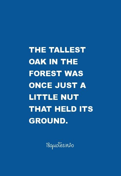 The Tallest Oak I The Forest Was Once Just A Little Nut That Held Its Ground Inspiration Motivation Worthy Quotes Best Motivational Quotes Best Love Quotes