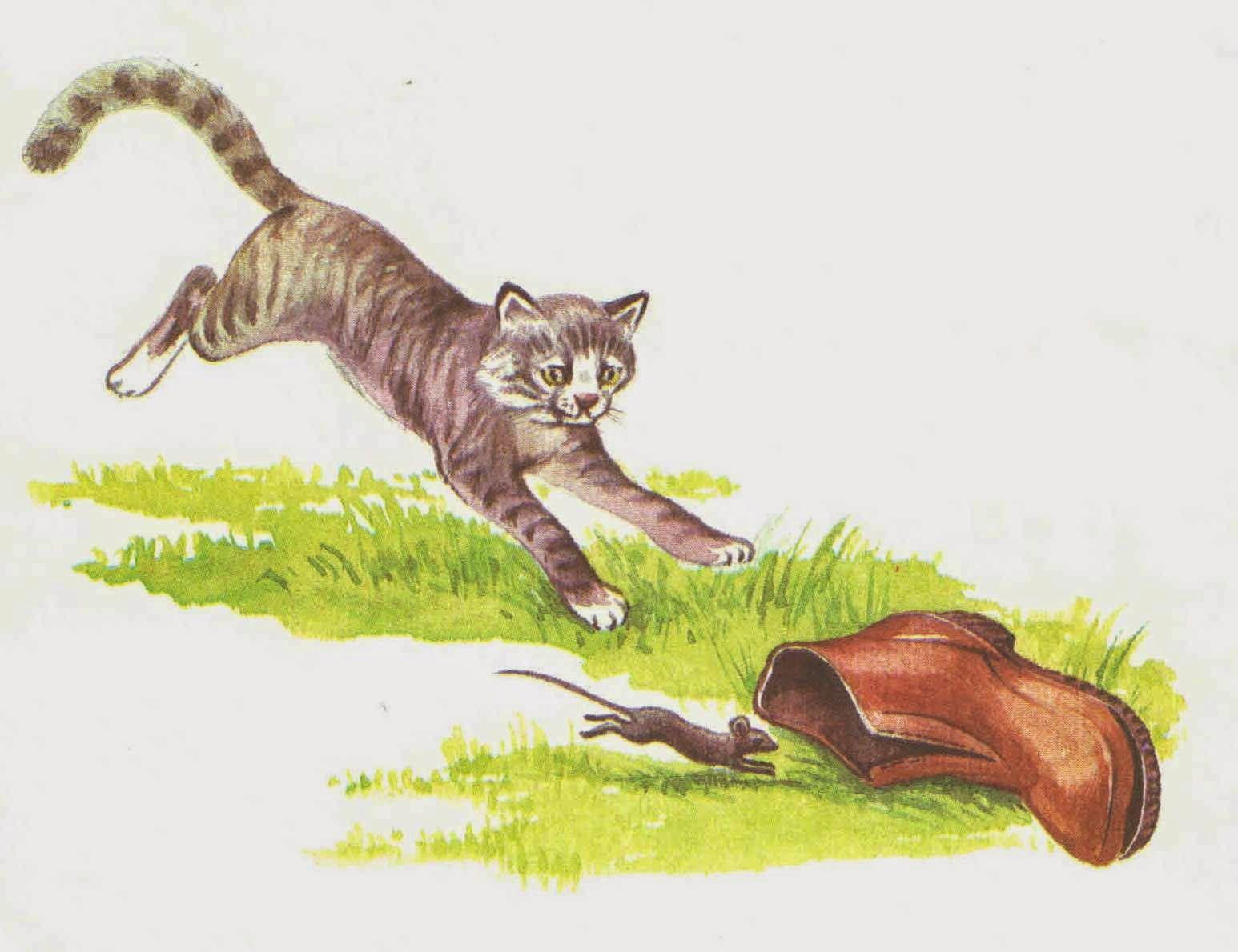 ним составляем рассказ по картинкам кошки пишет красочные
