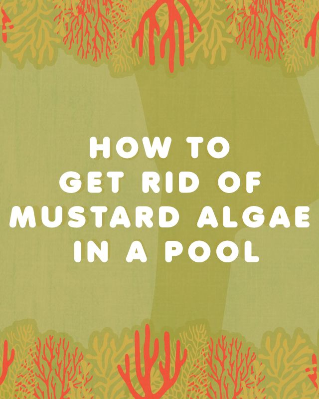 How to get rid of mustard algae in a pool pool mustard - How to get rid of algae in a swimming pool ...