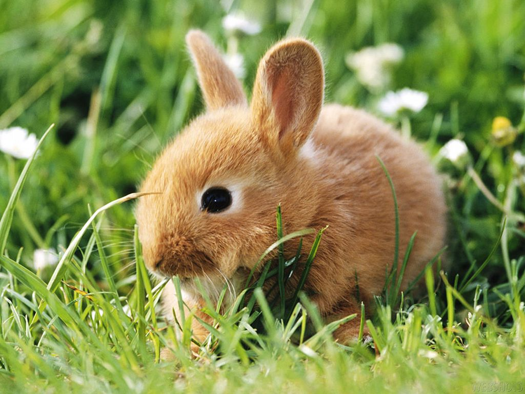What A Darling Little Bunny Cute Baby Animals Bunny Wallpaper Dwarf Rabbit