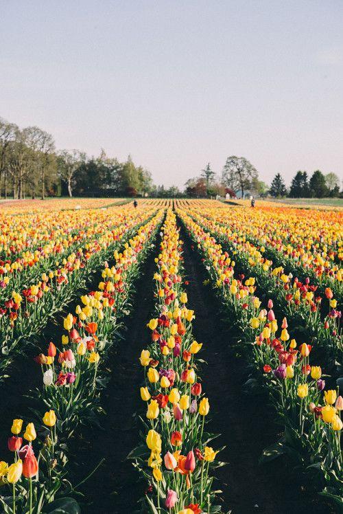 Quick Trip To Oregon Julia Berolzheimer Flower Field Nature Planting Flowers