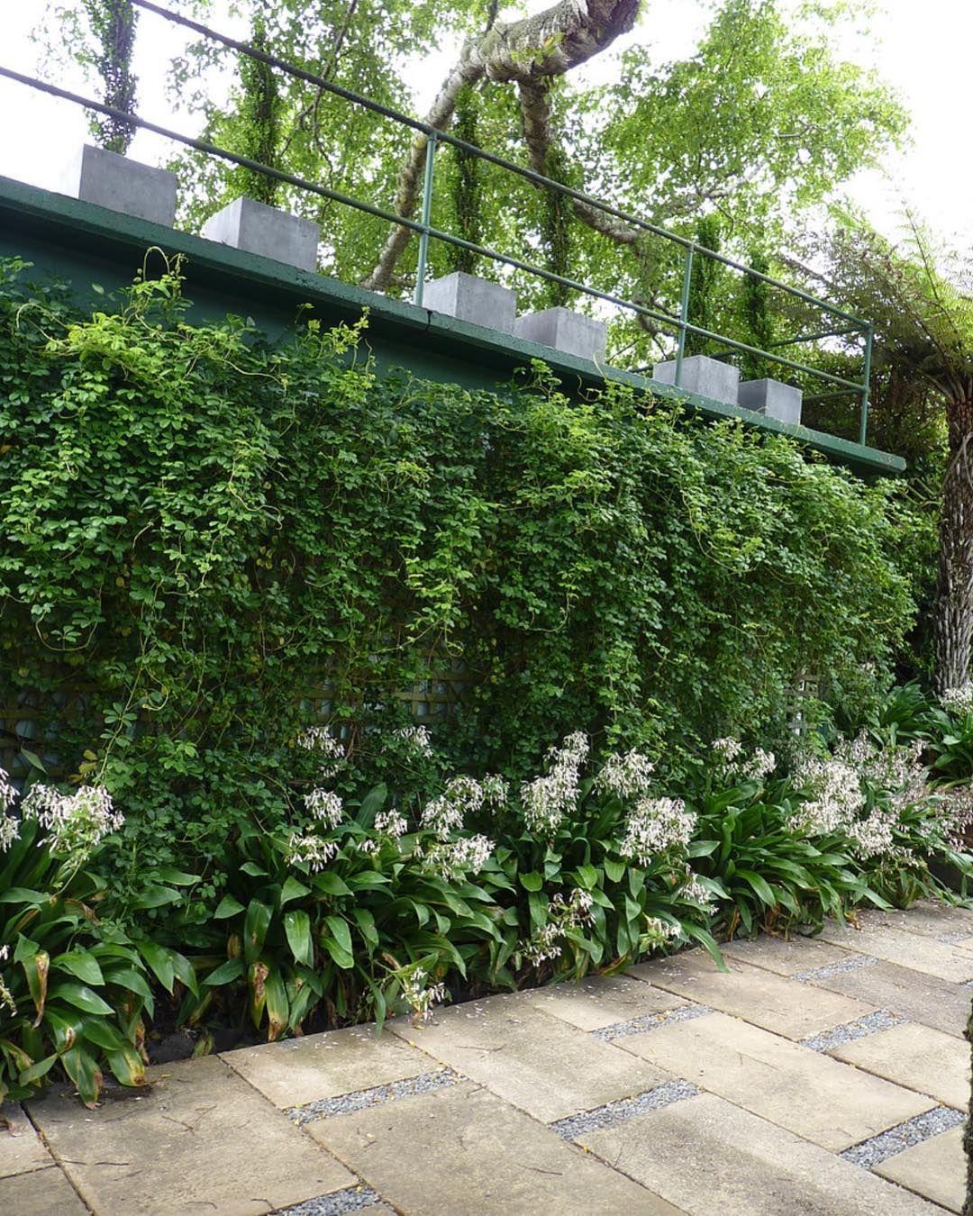 Nz Native Garden Landscape Design ` Nz Native Garden# ...