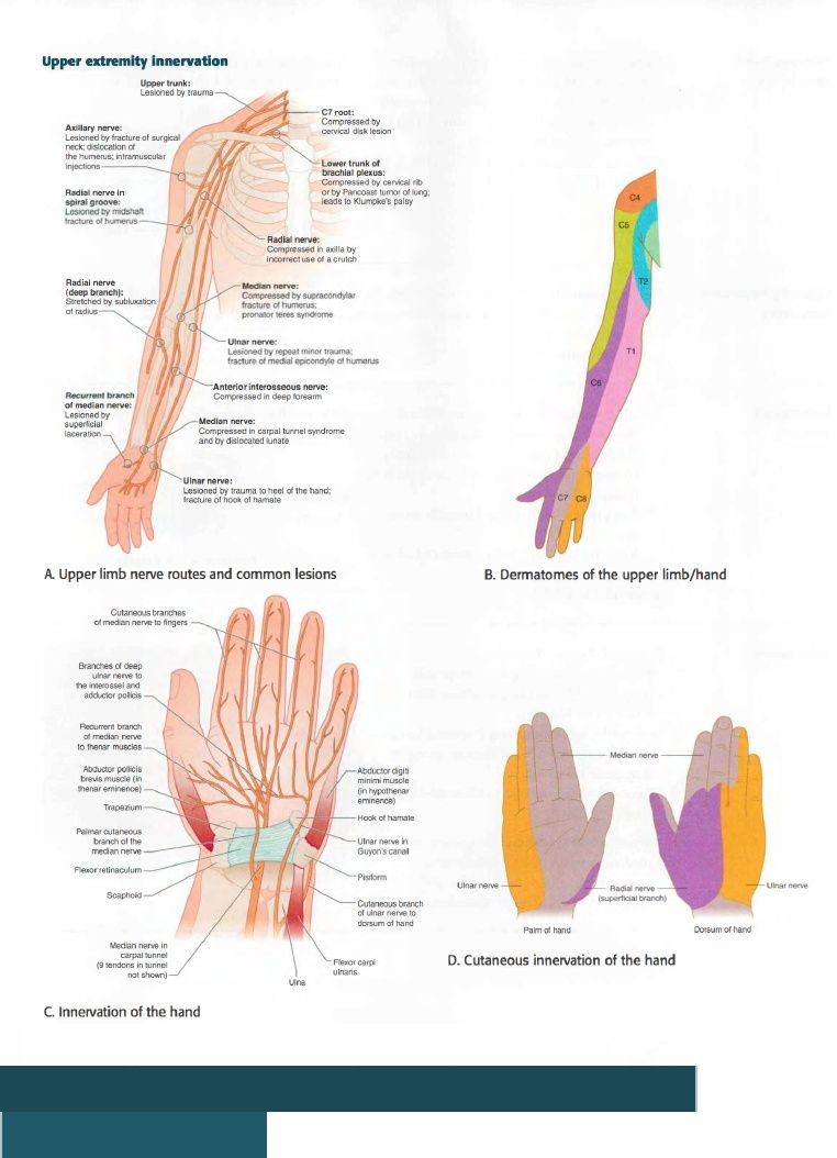 Omt Review Anatomical Terms Of Motion Massage N Mf Release