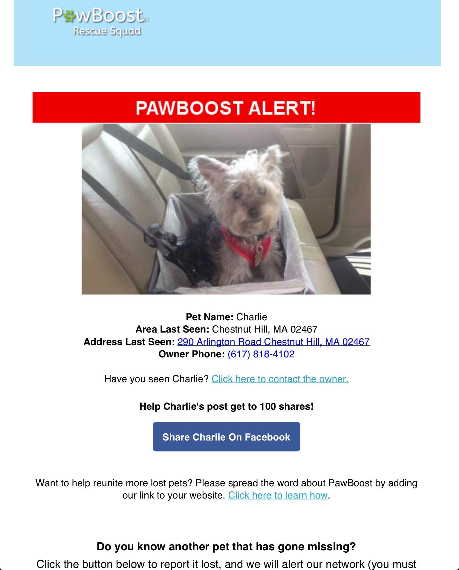 Lost Dog Named Charlie Chestnut Hill Ma Losing A Dog Dog Names Pet Names