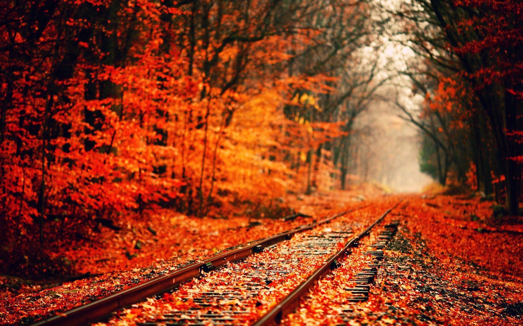 Fall Wallpaper  Nature  Pinterest  Fall background, Hd wallpaper and Fall ...