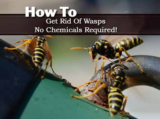 e798e19b87f266f83220fef589e39e4e - How To Get Rid Of Small Paper Wasp Nest