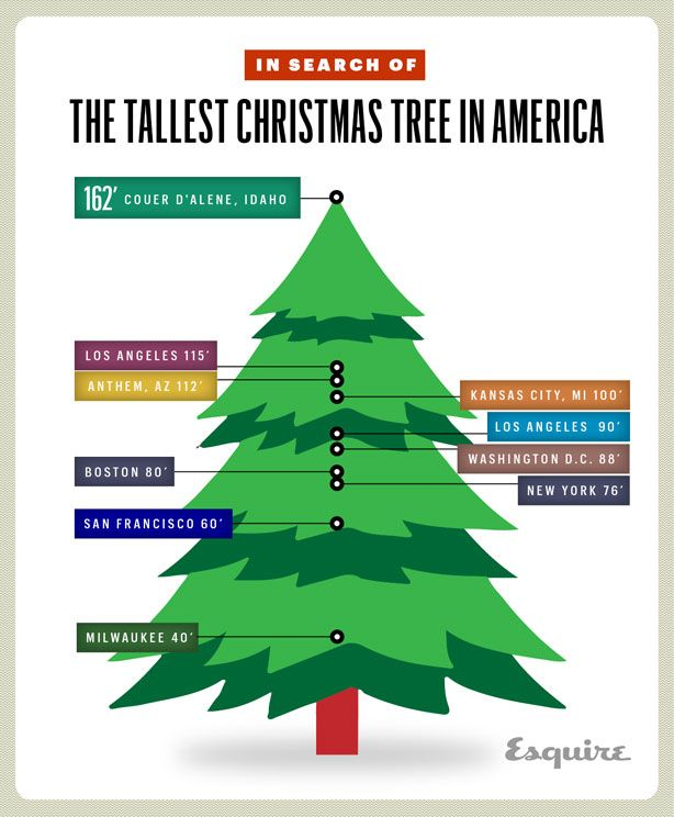 In Search Of The Tallest Christmas Tree In America Tall Christmas Trees Christmas Tree Christmas Infographic