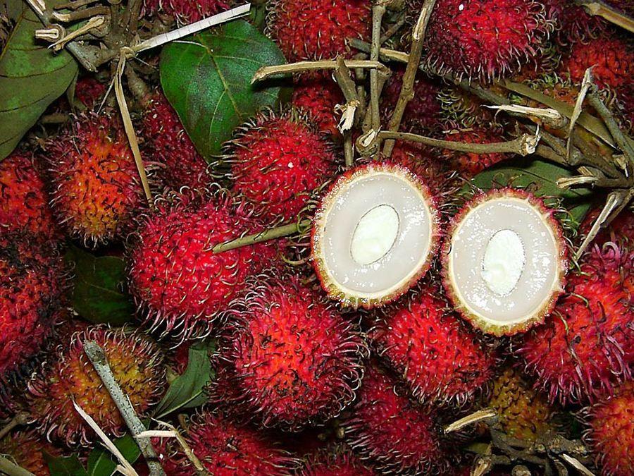 принципе очень редкие тропические ягоды фото цвет