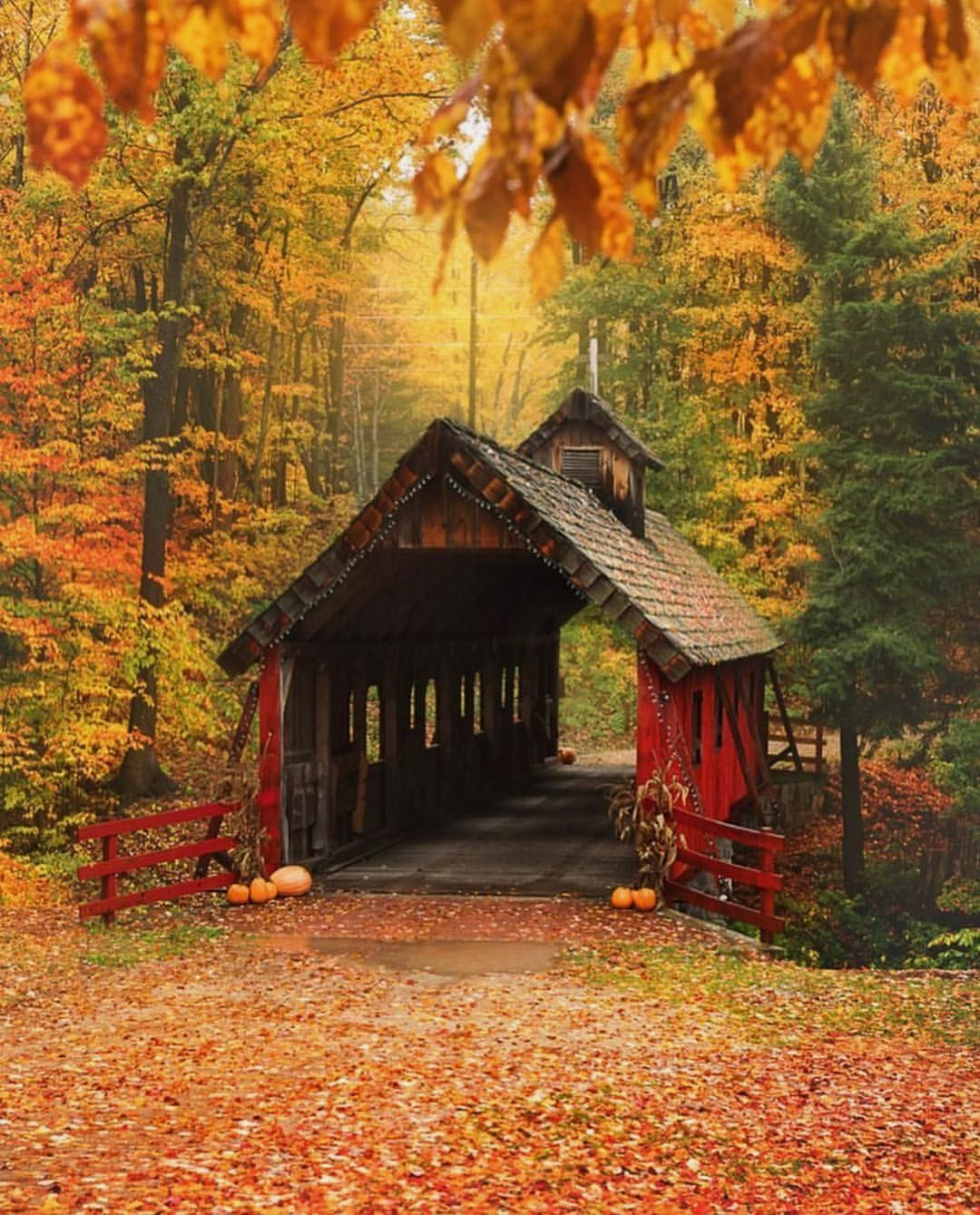 #autumnscenes