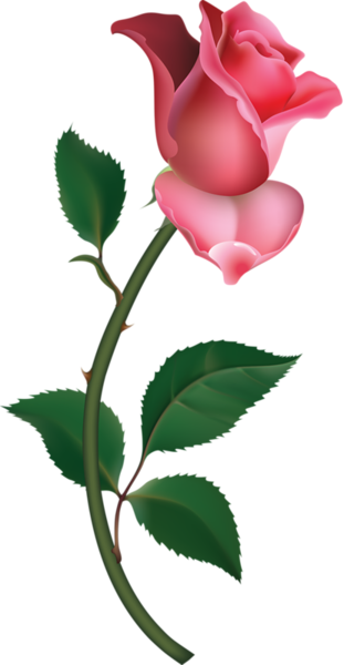 large pink rose bud painting png clipart great artist collection rh pinterest co uk pink rose clip art free pink rose clipart png