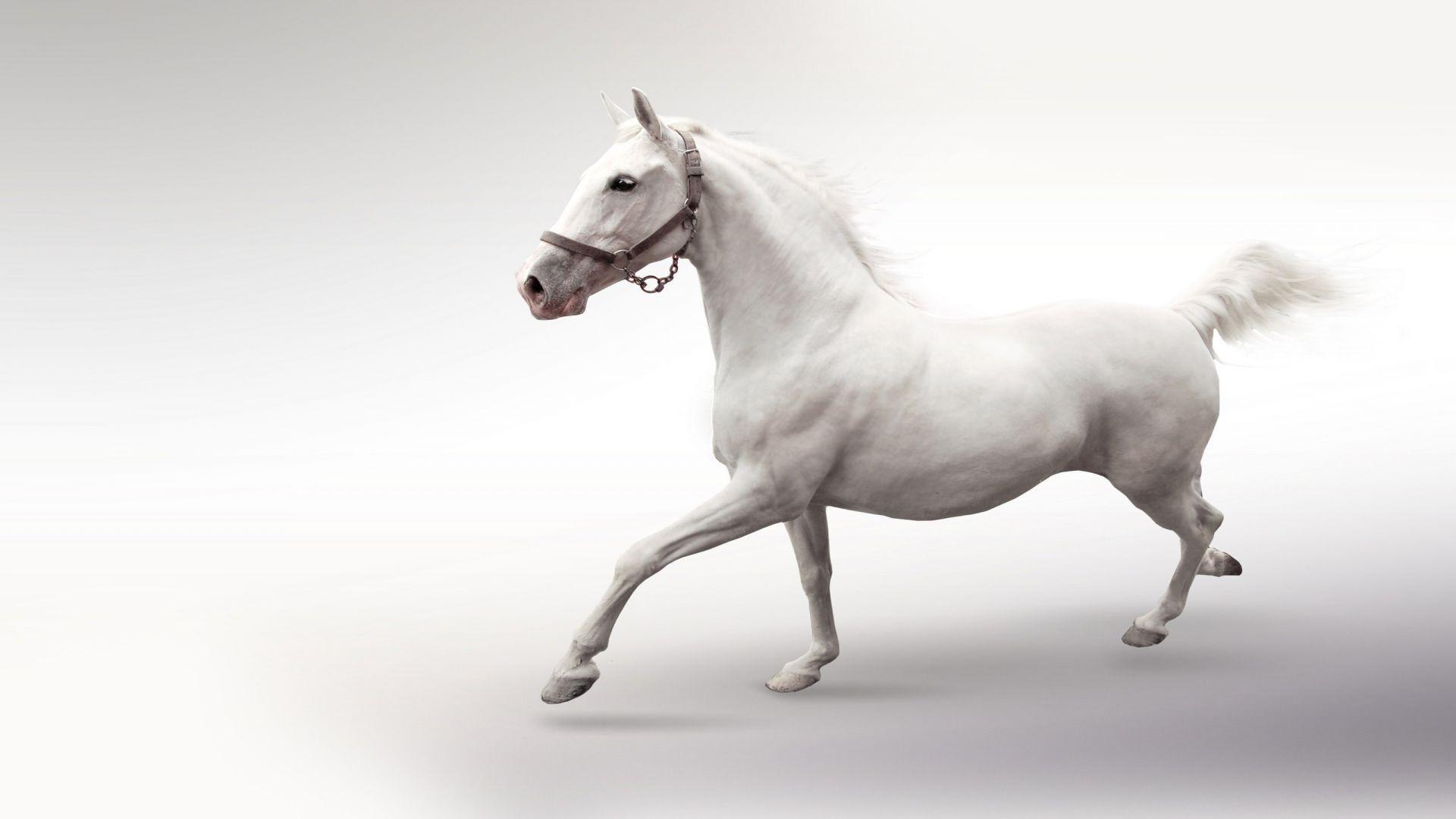 Fantastic Wallpaper Horse Windows - e79a026efb12554cfec3710cde900ea7  Photograph_85837.jpg