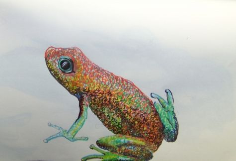 Little frog a pen and ink drawing on mole skin paper -- Shanti Marie