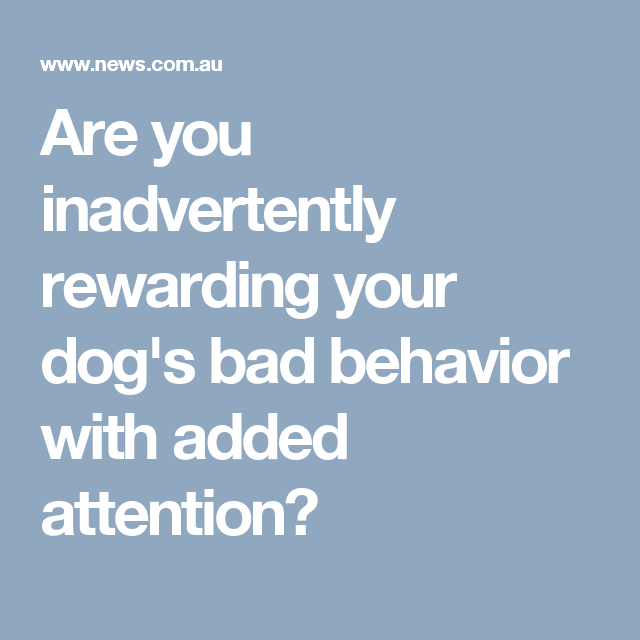 Are you inadvertently rewarding your dog's bad behavior with added attention?