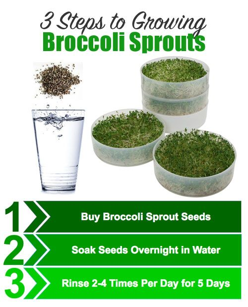 3 Steps To Growing Broccoli Sprouts Easier And Er Way Get