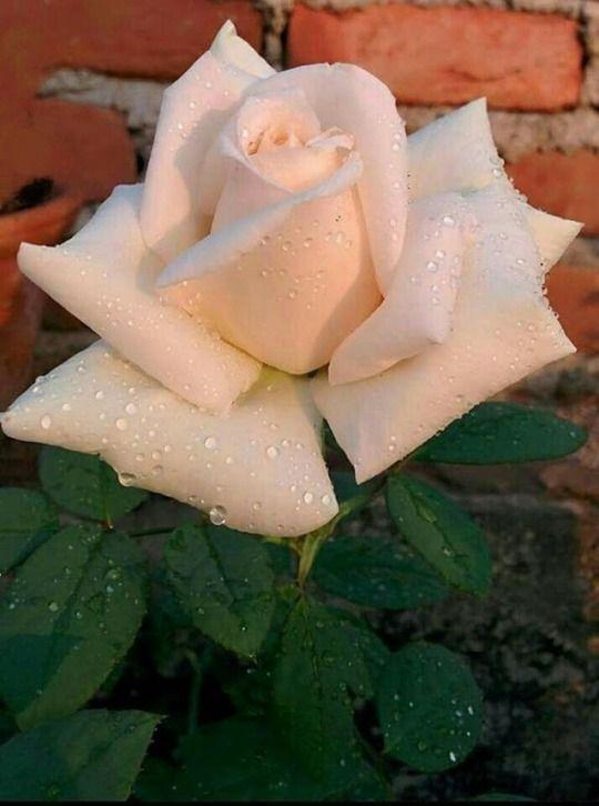 Don T Wait Life Goes Faster Than You Think Fleurs La Vie En